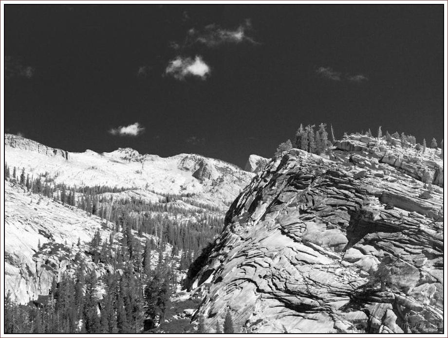 2807 Yosemite Hatchy Hatchy Valley June 2012 BW.jpg