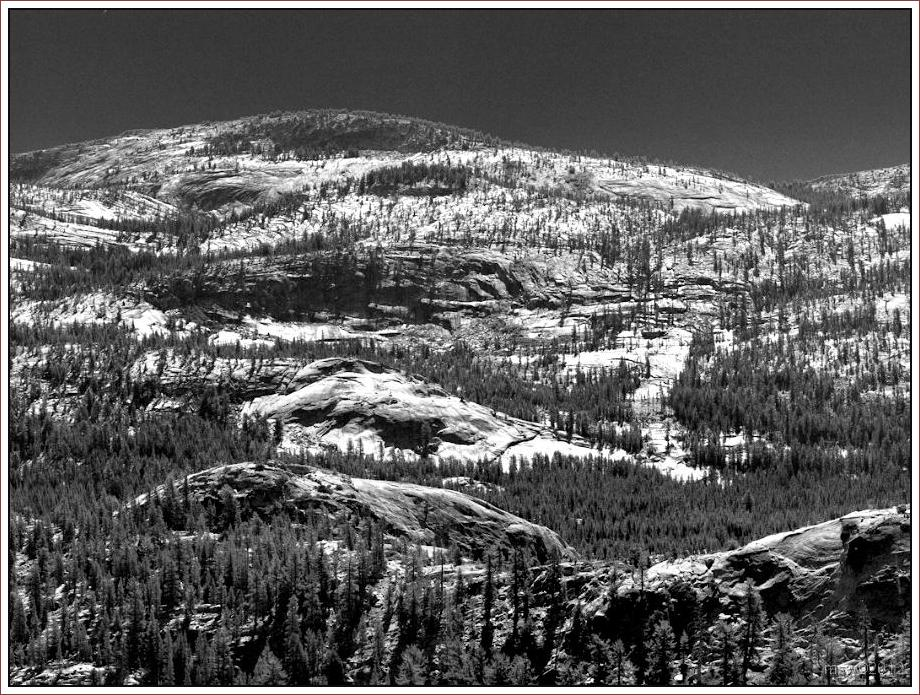 2809 Yosemite Hatchy Hatchy Valley June 2012 BW.jpg