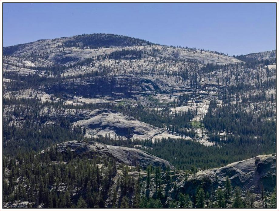 2809 Yosemite Hatchy Hatchy Valley June 2012.jpg
