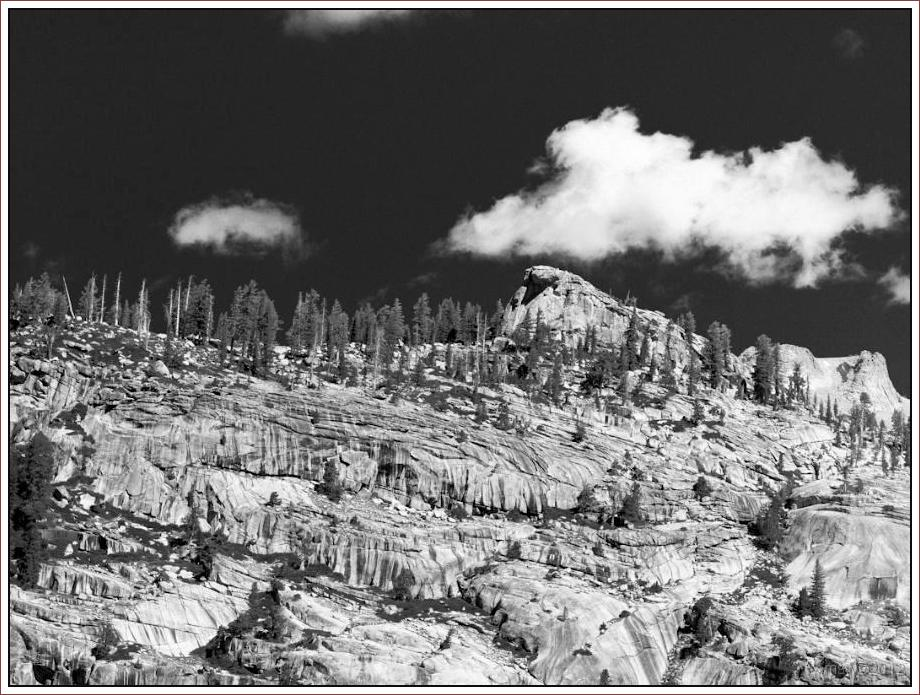 2808 Yosemite Hatchy Hatchy Valley June 2012 BW.jpg