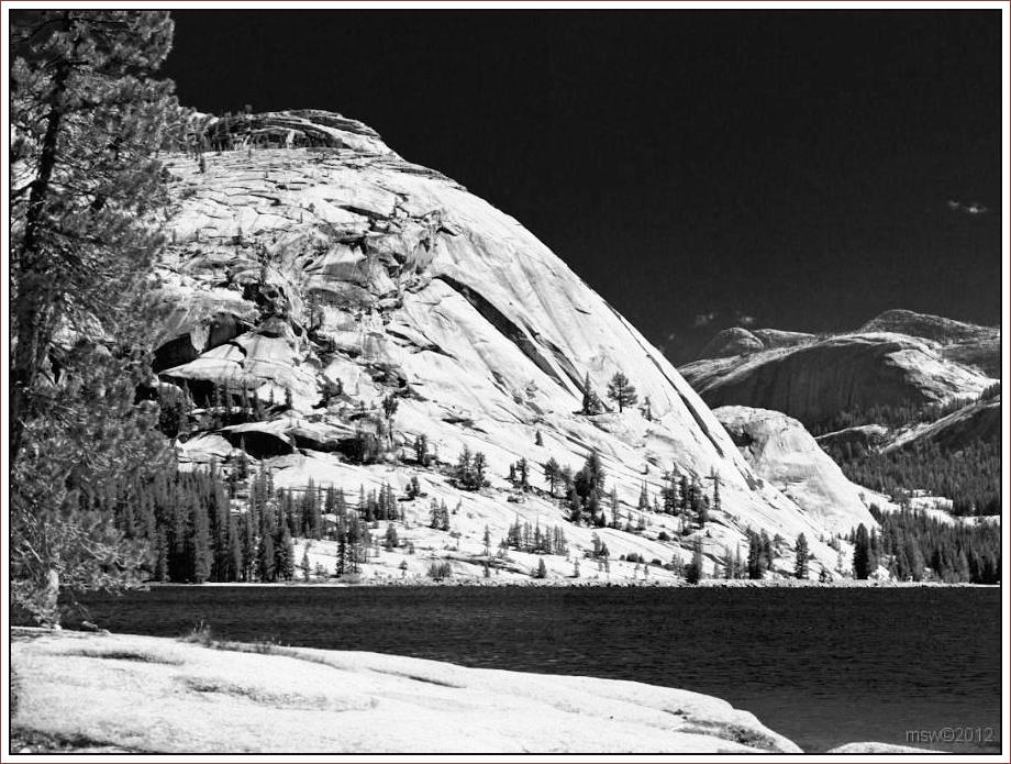 2814 Yosemite Hatchy Hatchy Valley June 2012 BW.jpg