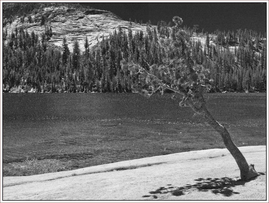 2820 Yosemite Hatchy Hatchy Valley June 2012 BW.jpg