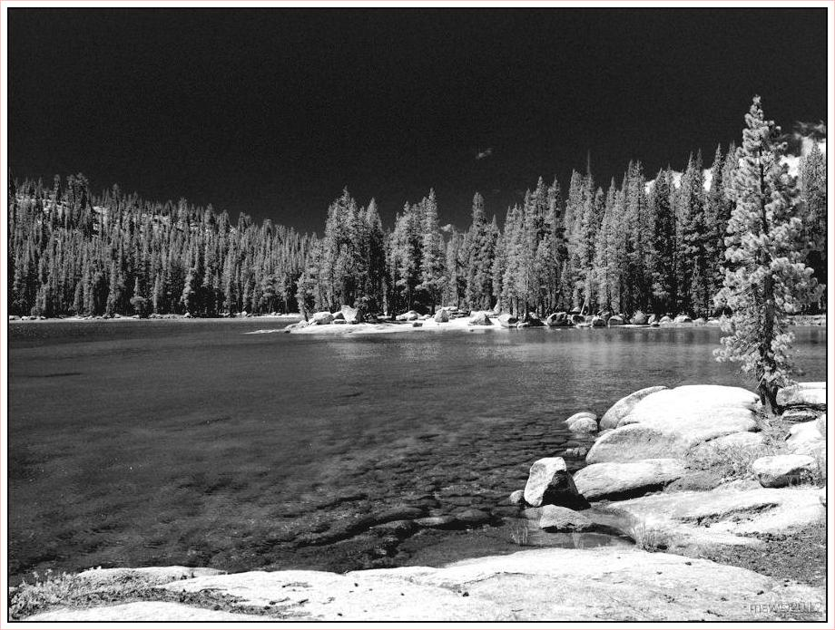 2822 Yosemite Hatchy Hatchy Valley June 2012 BW.jpg