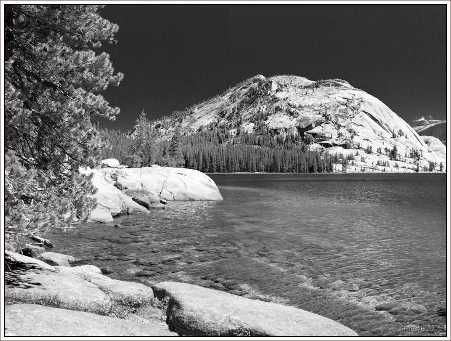2825 Yosemite Hatchy Hatchy Valley June 2012 BW.jpg