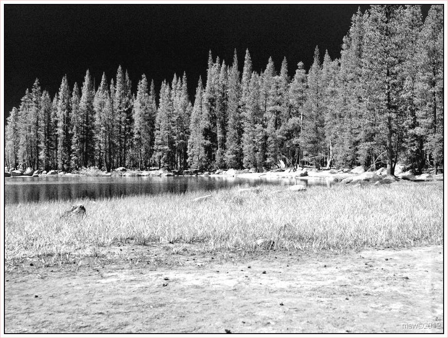 2826 Yosemite Hatchy Hatchy Valley June 2012 BW.jpg