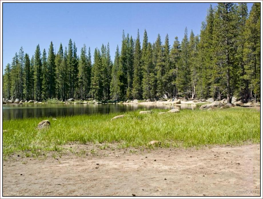 2826 Yosemite Hatchy Hatchy Valley June 2012.jpg