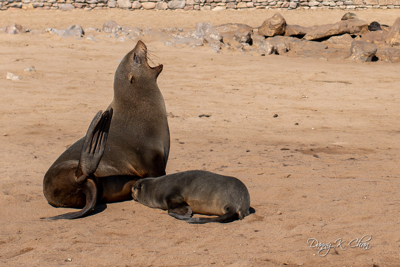 e190609_Skeleton Coast-12.jpg