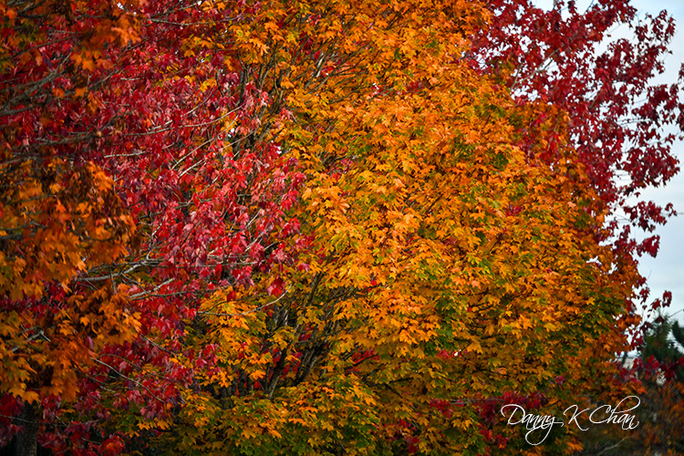 201021 Fall Color  (4).jpg