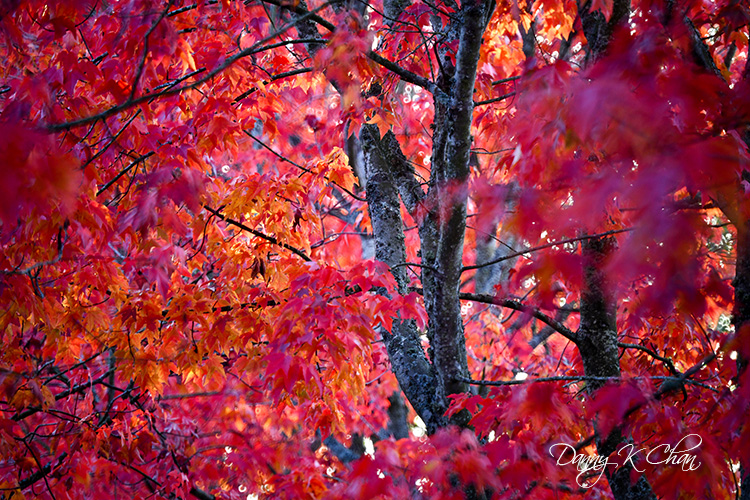 201021 Fall Color  (7).jpg