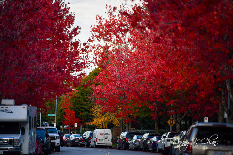201021 Fall Color  (5).jpg