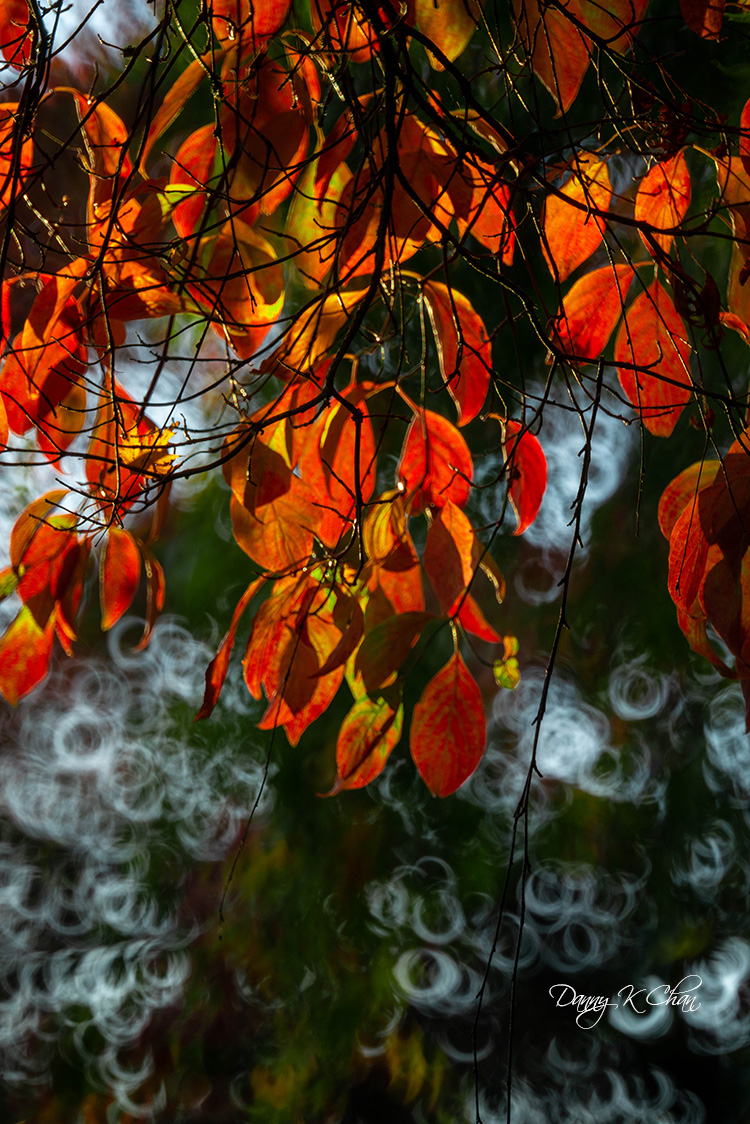 201021 Fall Color  (10).jpg