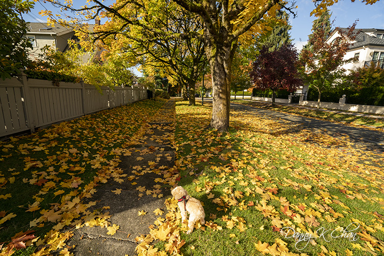 201029 Fall leaves-7.jpg