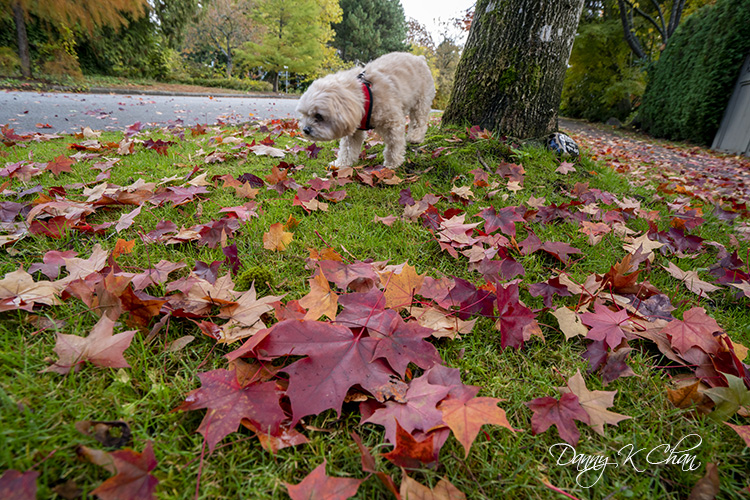 201029 Fall leaves-6.jpg