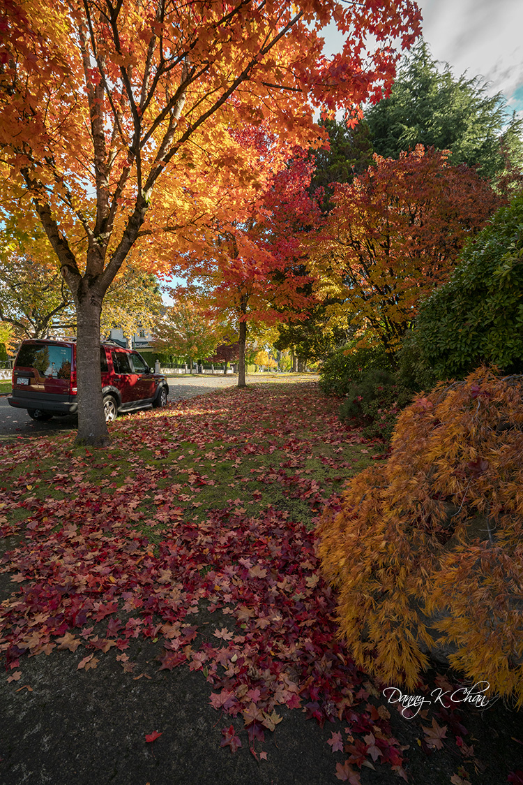 201029 Fall leaves-8.jpg