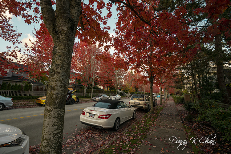 201029 Fall leaves-5.jpg