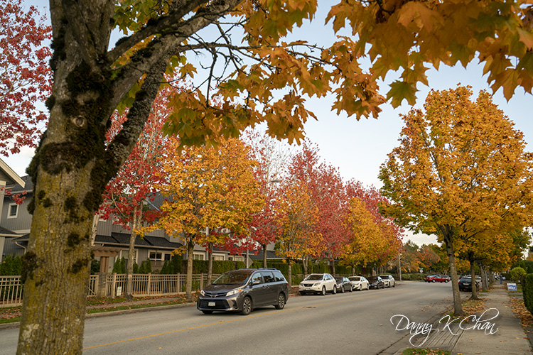 201029 Fall leaves-2.jpg